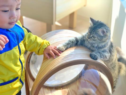 猫と触れ合う人間の子供 by Moff animal cafeアリオ倉敷店