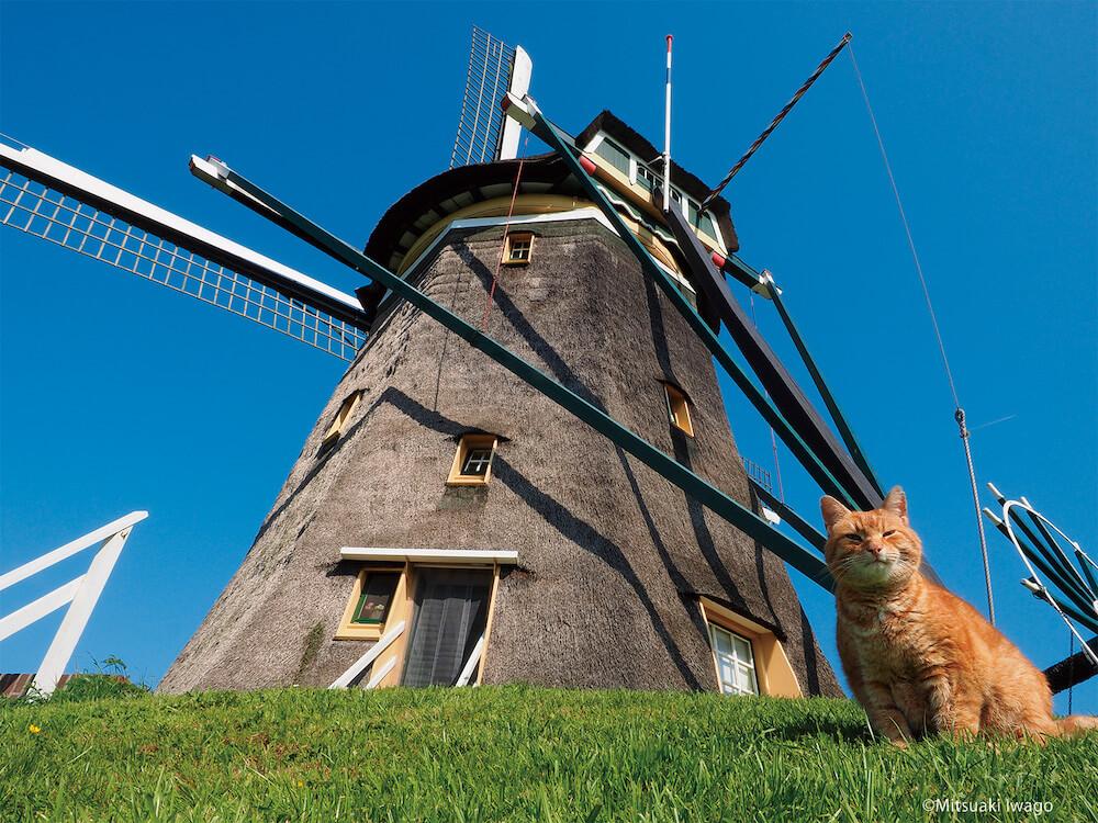 オランダ・ストンプウェイクの風車の前に座る猫 by 写真展 岩合光昭の世界ネコ歩き2