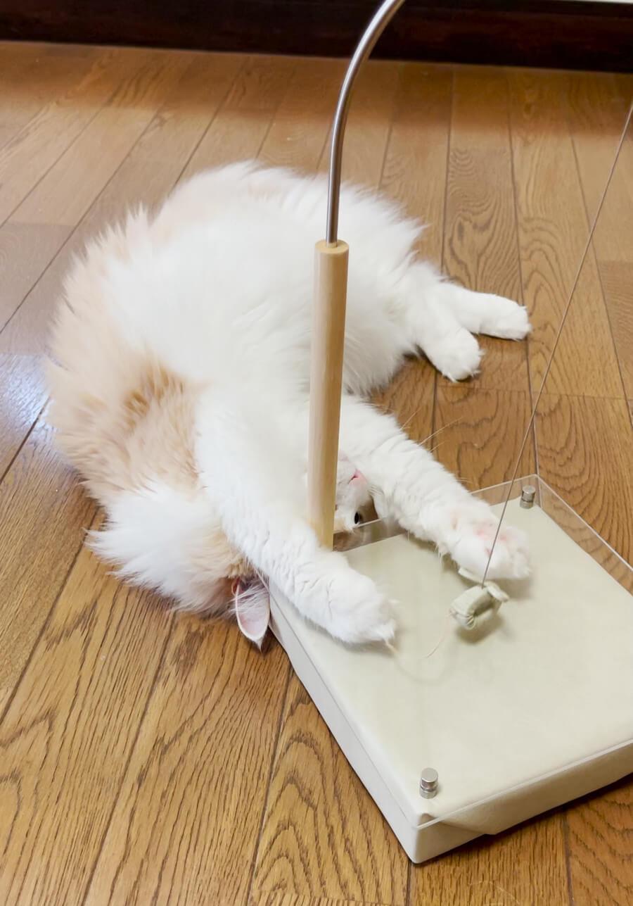 磁石の力で動く猫用おもちゃ「マグネッコ」にじゃれつく猫