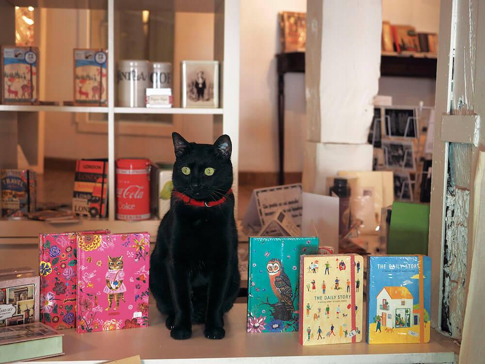 スペイン・マドリードの本屋の看板猫 by 写真展 岩合光昭の世界ネコ歩き2