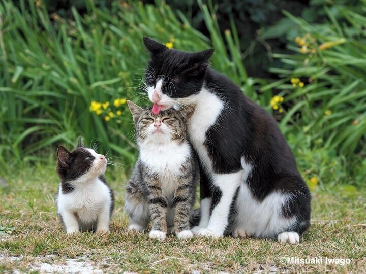 沖縄の猫 by 写真集『岩合光昭 み~んな元気ネコ』