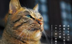 ネコの寿命を伸ばす治療法を開発!その道のりを研究者がつづった書籍「猫が30歳まで生きる日」