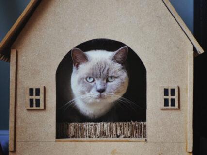 賞金総額は50万円!建築カフェが「猫の棲家」をテーマにした模型コンテストを開催中