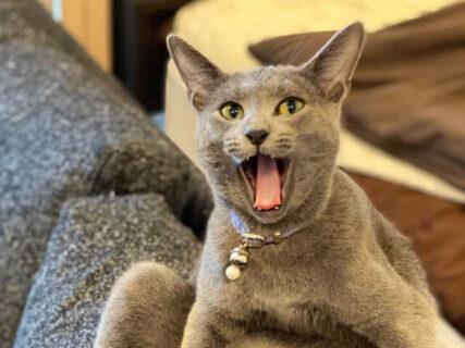 1800枚のネコ写真を一挙公開!猫グッズも集まるイベント「ねこにすと」渋谷マルイで開催中