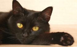 猫がごはんを食べない時はどうすればいいの?ネコ専門医が解説するWEBセミナーが9/4に開催