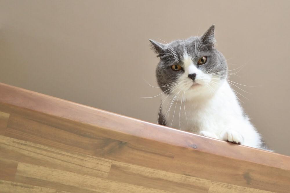 テーブルの上から見下ろす猫のイメージ写真