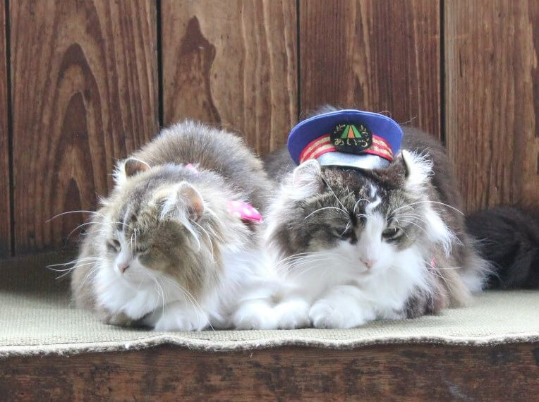 芦ノ牧温泉駅で働く人気の猫「らぶ駅長」とさくら