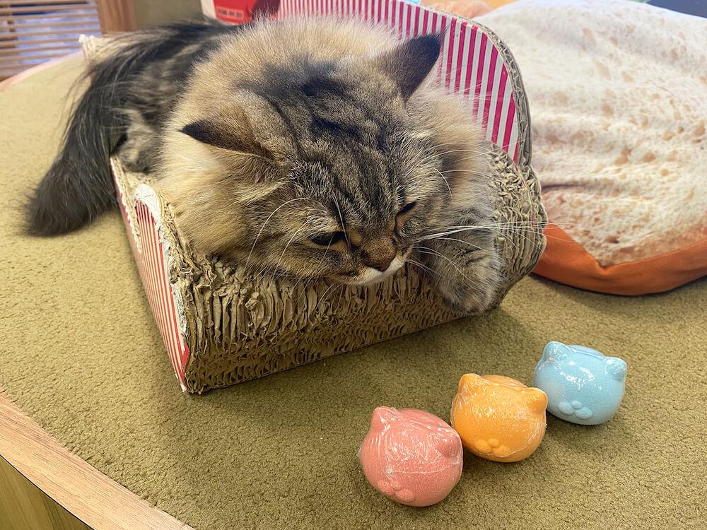 猫型の入浴剤「NEKOMOTE Bath ball(ネコモテ バスボール)」を見つめる猫