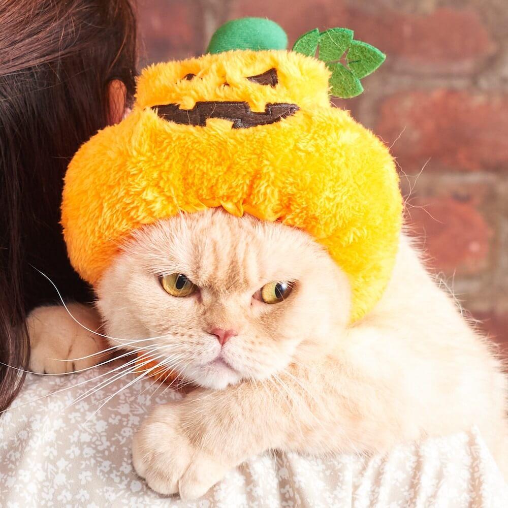 ハロウィンデザインの猫用帽子「ほっかむり パンプキン」 by オーサムストア