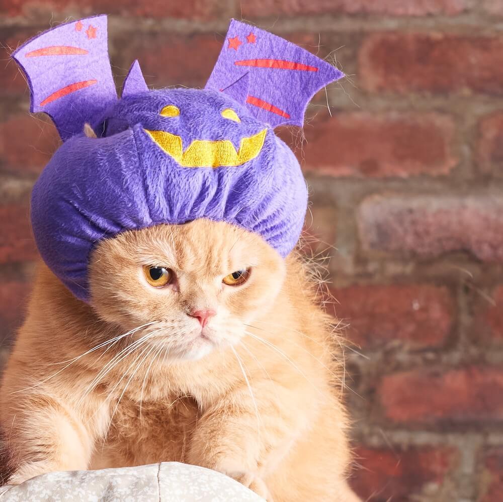 ハロウィンデザインの猫用帽子「ほっかむり コウモリ」 by オーサムストア