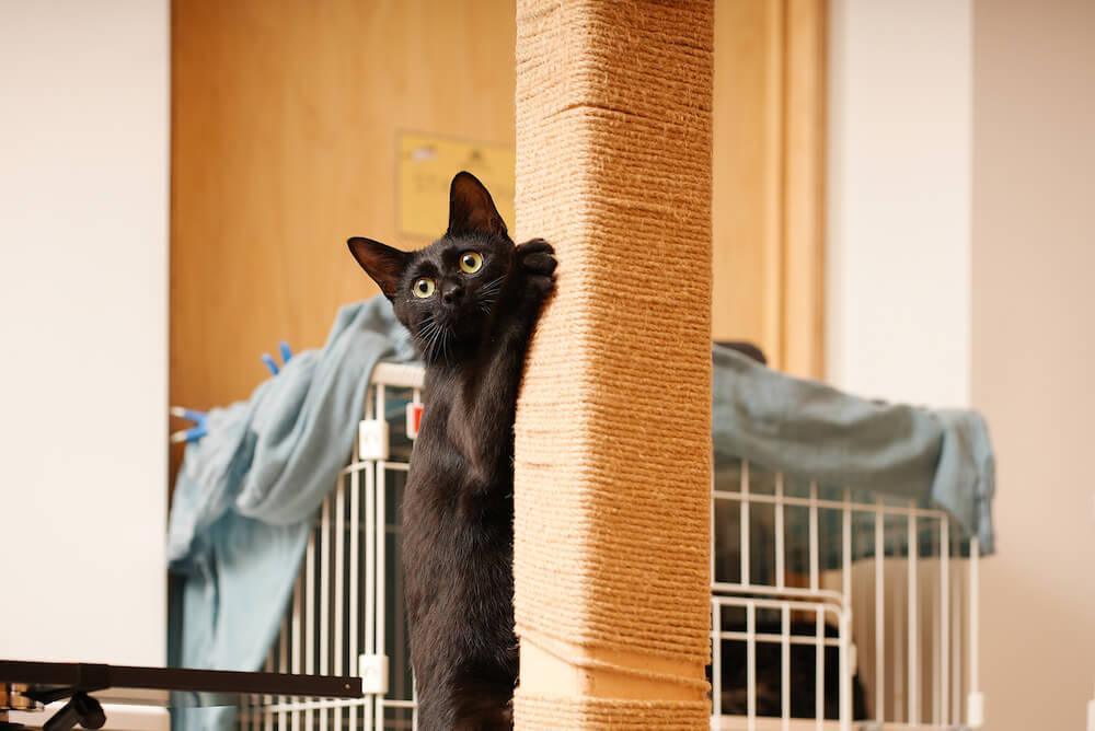 ネコリパランド(NECOREPA LAND)の保護猫スタッフ