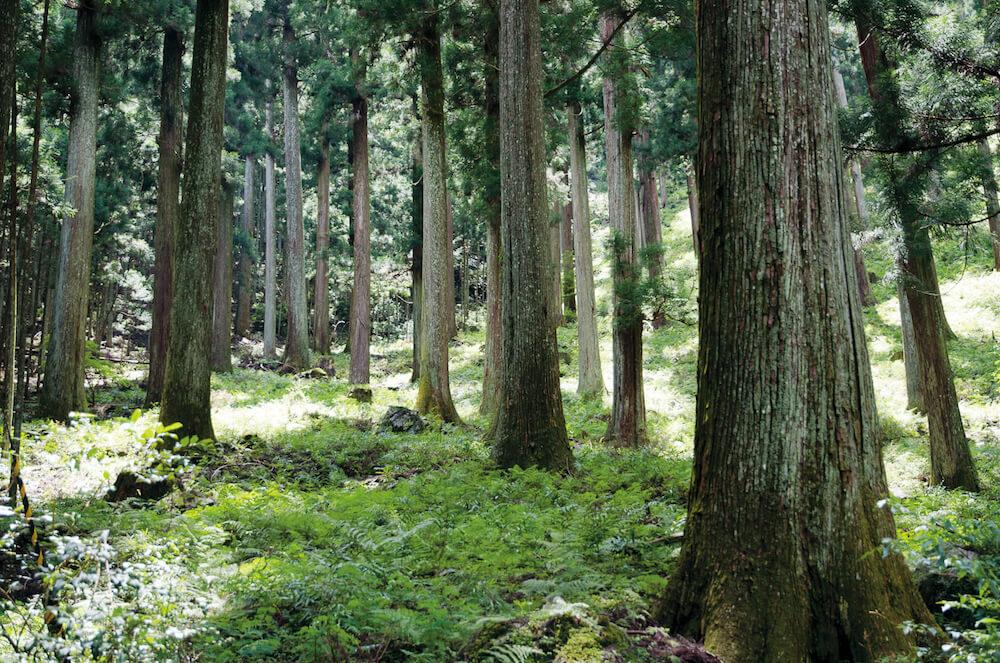 植林されている吉野桧のイメージ