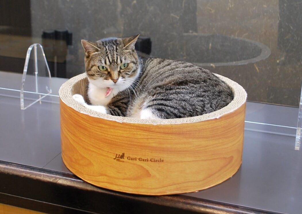 天童市の旅館・松伯亭 あづま荘にいる看板猫の女将「まいちゃん」