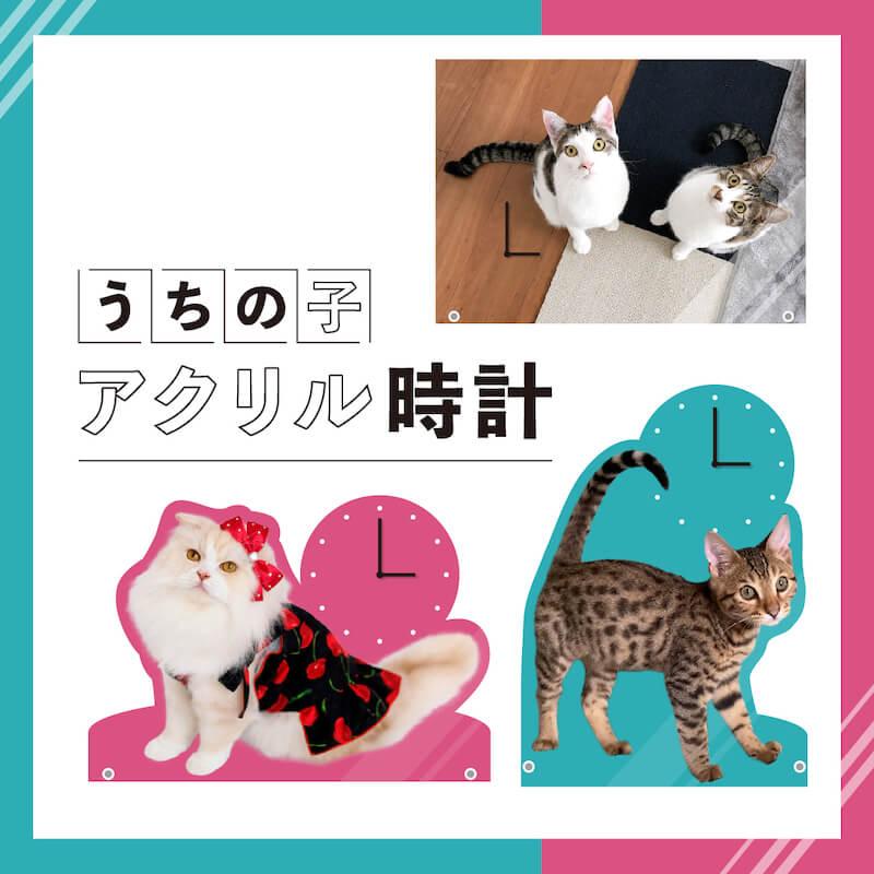 愛猫の写真で作れる「うちの子アクリル時計」