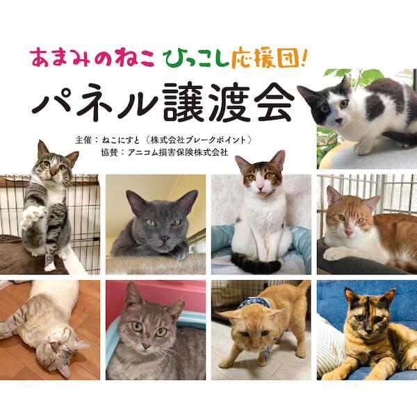 奄美の猫ひっこし応援団、パネル譲渡会
