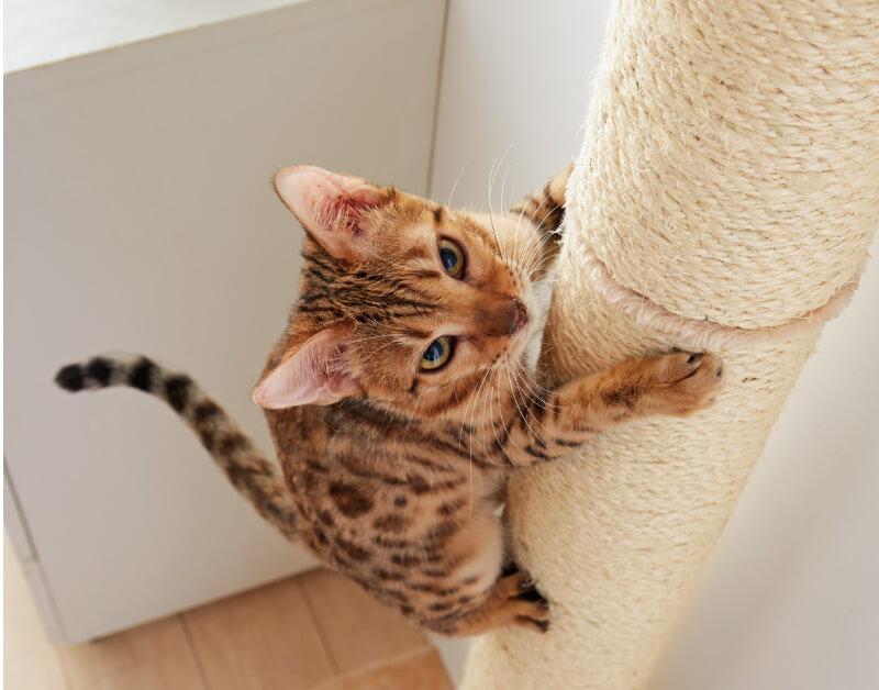 おうちで木登りタワーを登る猫のイメージ
