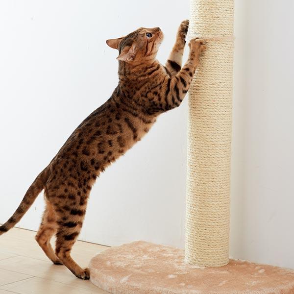 おうちで木登りタワーで爪を研ぐ猫