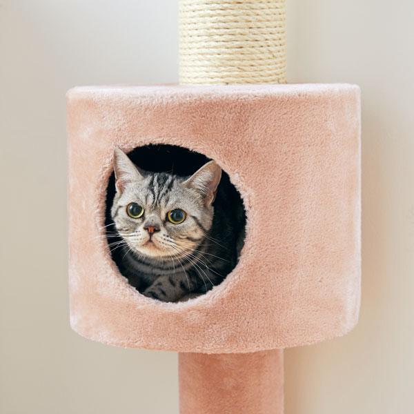 おうちで木登りタワーのボックス内に入る猫