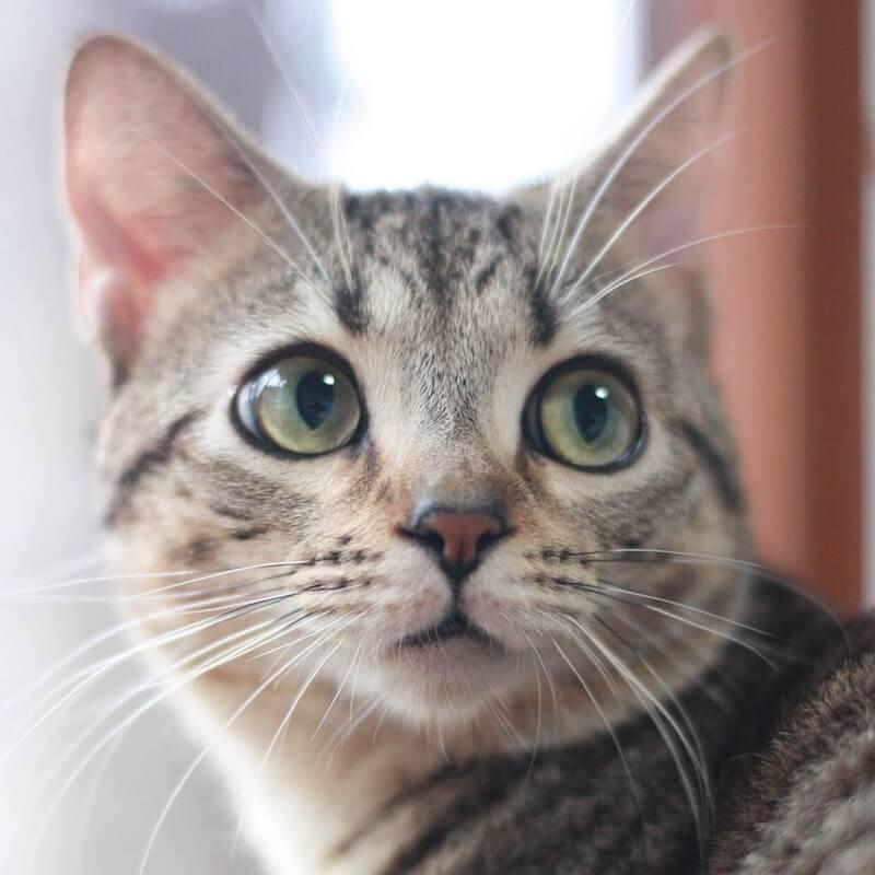おっとりした表情の猫
