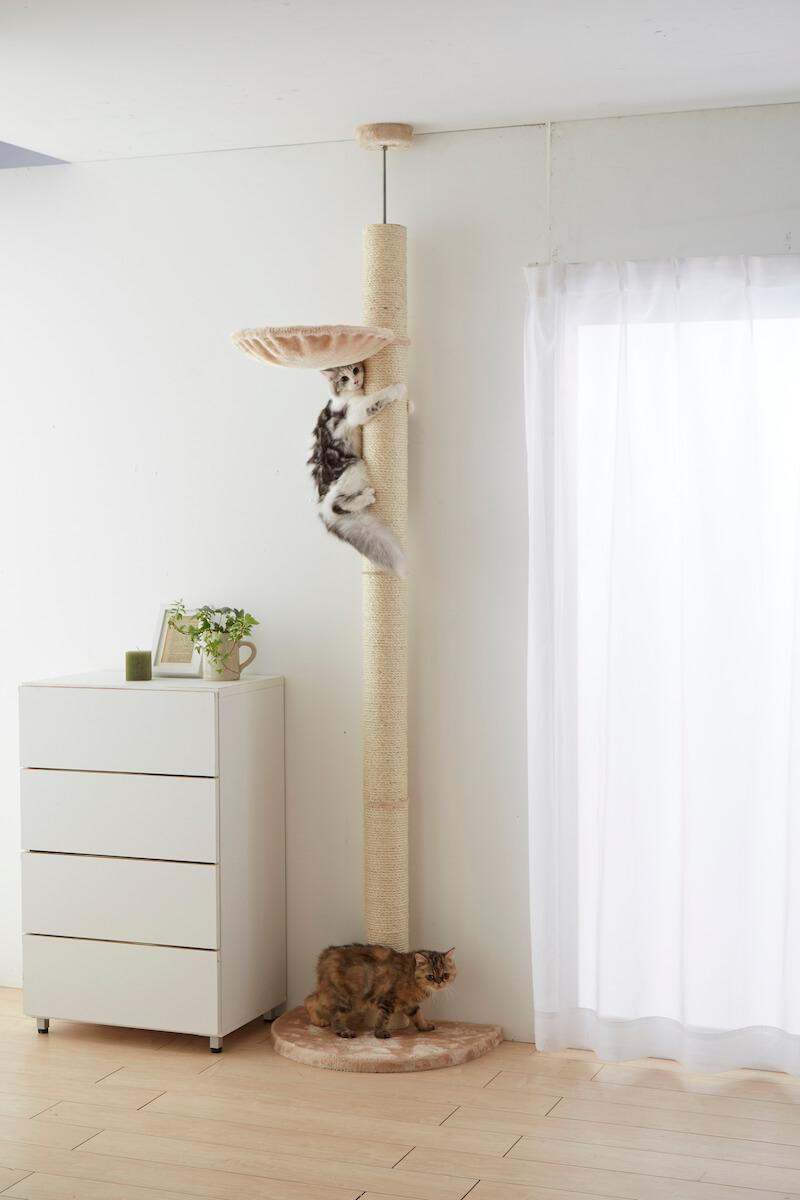 おうちで木登りタワーを天井近くまでよじ登る猫