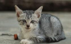 環境省とAmazonが提携!保護猫・保護犬の譲渡拡大を支援する「つなぐ絆、つなぐ命」プロジェクト