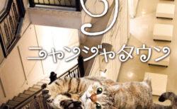 ナンジャタウンに30匹の猫がやってくる!猫と触れ合える新街区「ニャンジャタウン」がオープン