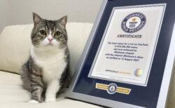 日本の猫が再びギネス世界記録に認定!動画の再生数ニャンと6億回超えの人気ネコ「もちまる」