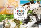 猫の旅行誌『にゃっぷる』から2022年版のカレンダーが登場!月替りで島ねこや街ねこを楽しめる