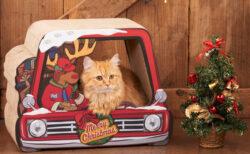 猫もサンタクロース気分♪ インテリアにもなるクリスマス仕様の爪とぎが登場
