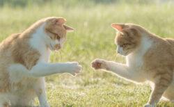 命を救われた犬猫たちの写真コンテスト、環境大臣賞や大阪府知事賞などの受賞作品が発表