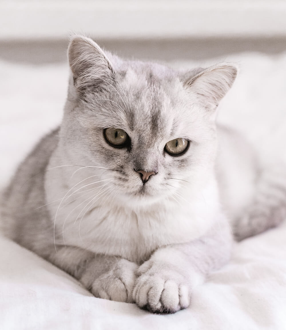 飼い猫のイメージ写真