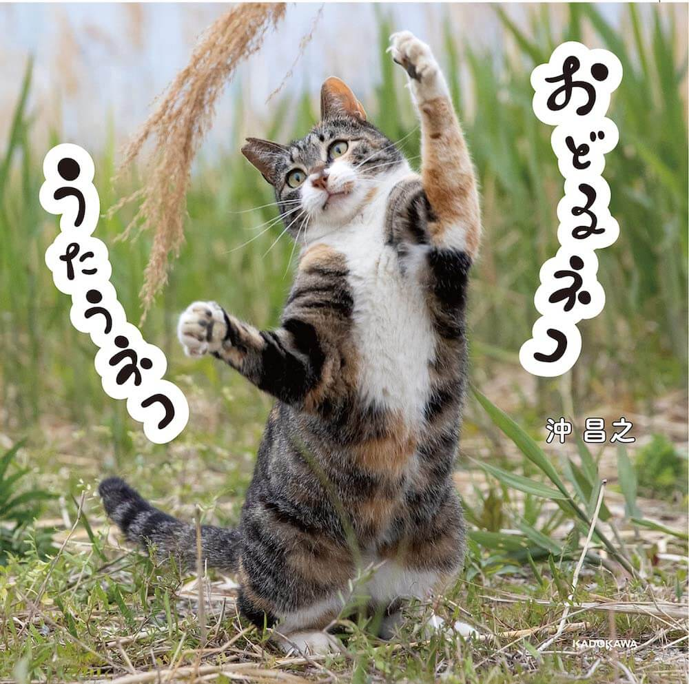 沖昌之さんの猫写真集『おどるネコうたうネコ』表紙イメージ(帯なし)