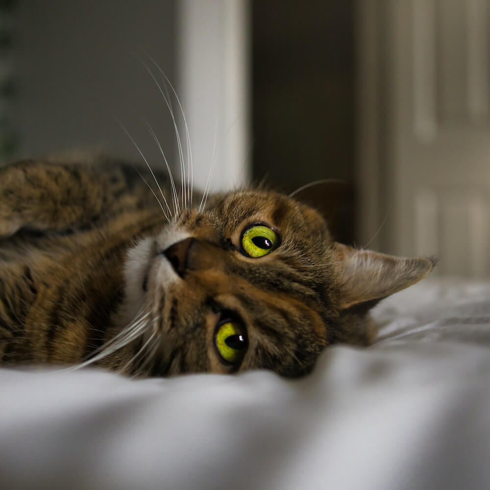 動物愛護のイメージ写真