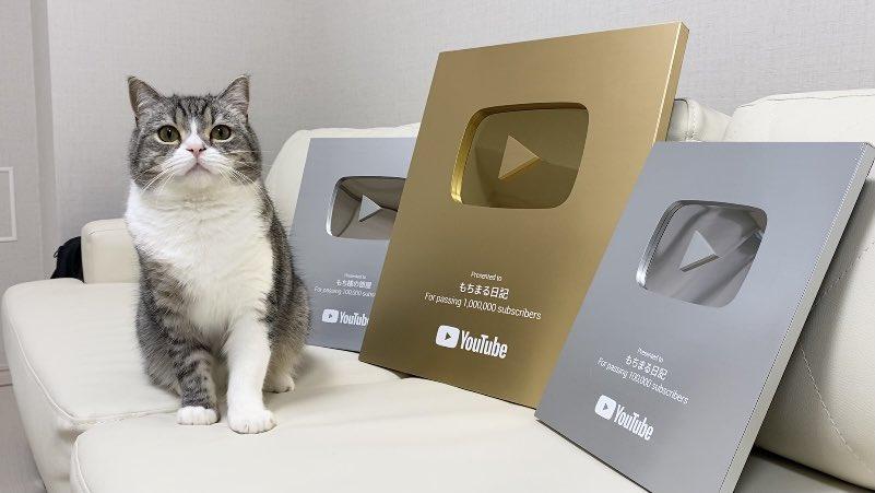 YouTubeからも表彰されている人気猫「もちまる」