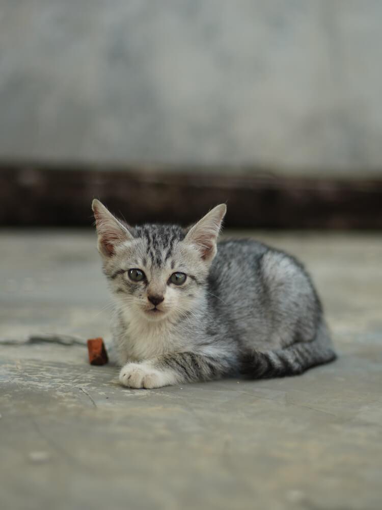 小さな野良猫のイメージ写真