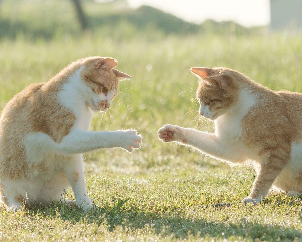 じゃんけんをしているような猫の写真 by 命をつないだワンニャン写真コンテスト「環境大臣賞」受賞作品