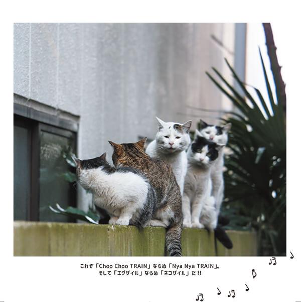 ボイストレーニングをしているかのように大きな口を開ける猫 by 沖昌之