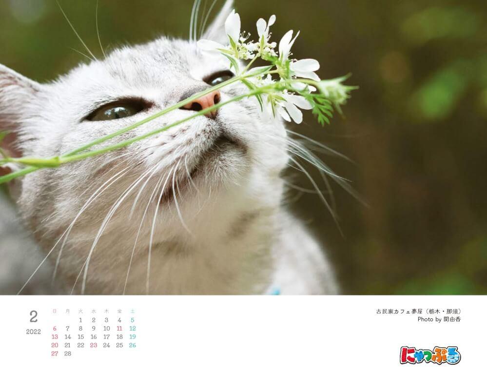 『にゃっぷる 旅するねこカレンダー2022 卓上版』の2月のページ、写真は古民家カフェ夢屋(栃木・那須) by 関由香