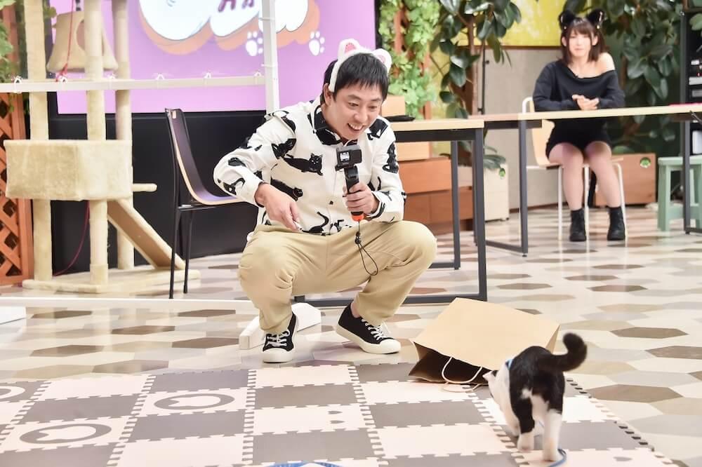 猫の動画を撮影する森田哲矢(さらば青春の光)