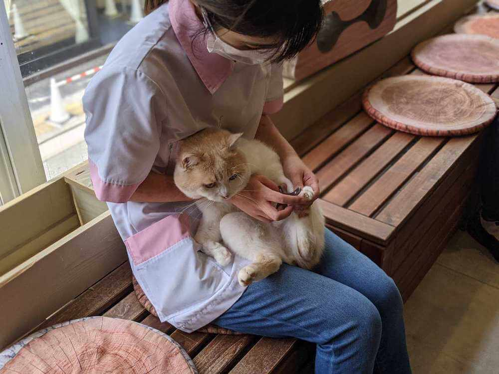 猫の爪を切る様子 by 動物カフェAnimeal(アニミル)の飼育体験イベント