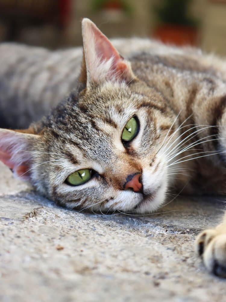 地面に寝転がる野良猫のイメージ写真