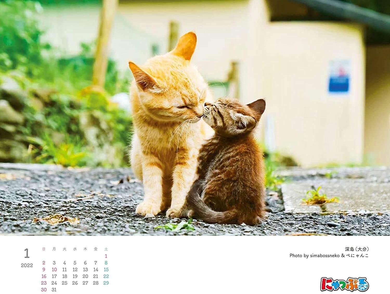 『にゃっぷる 旅するねこカレンダー2022 卓上版』の1月のページ、写真は深島・大分 by simabossneko&ぺにゃんこ