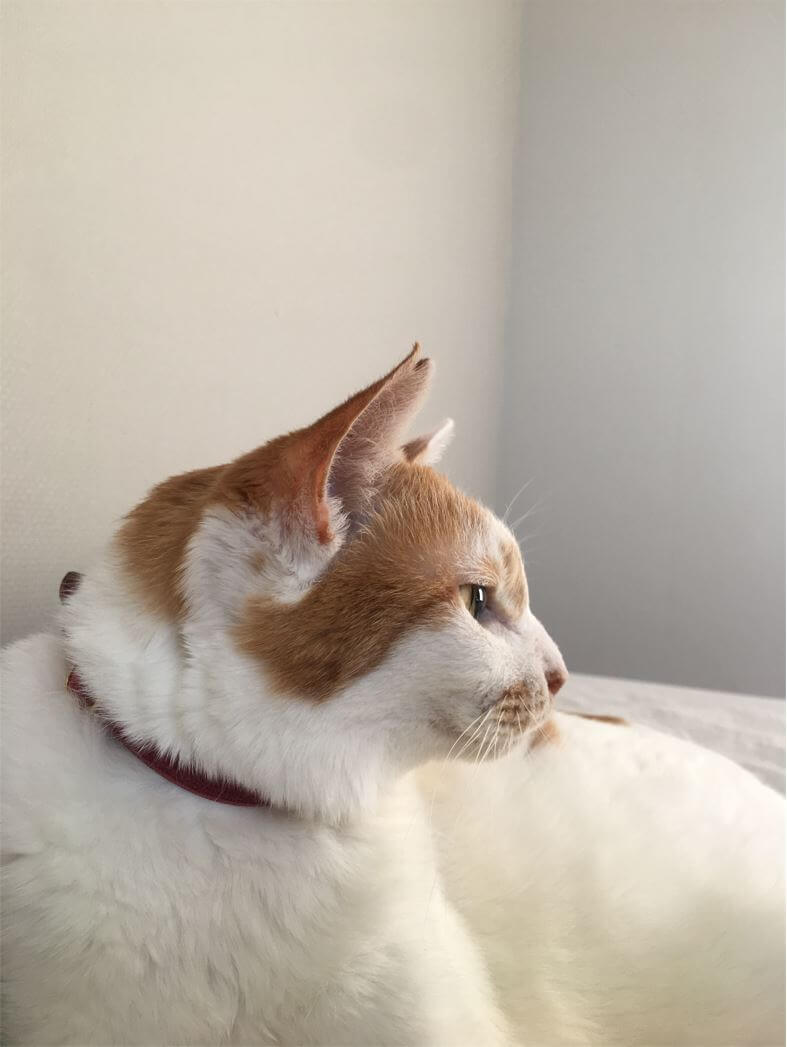 猫沢エミさんで2021年4月に亡くなった愛猫「イオ」