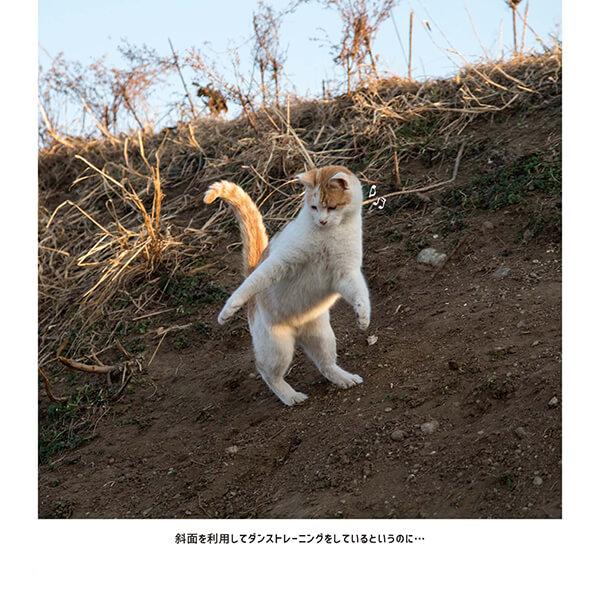 ダンストレーニングをしているかのようなポーズの猫 by 沖昌之