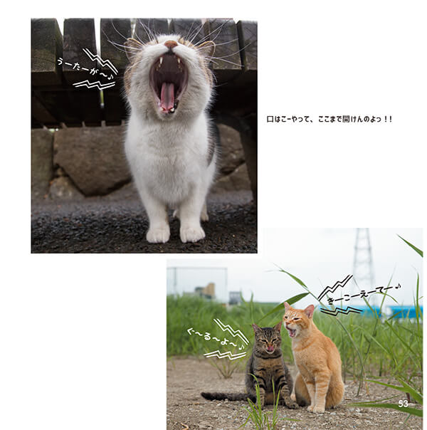 歌っているかのように大きな口を開ける猫 by 沖昌之