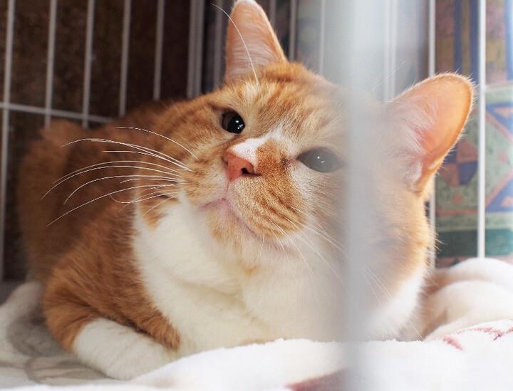 書籍「猫との約束」第14話に登場する猫のナッツ