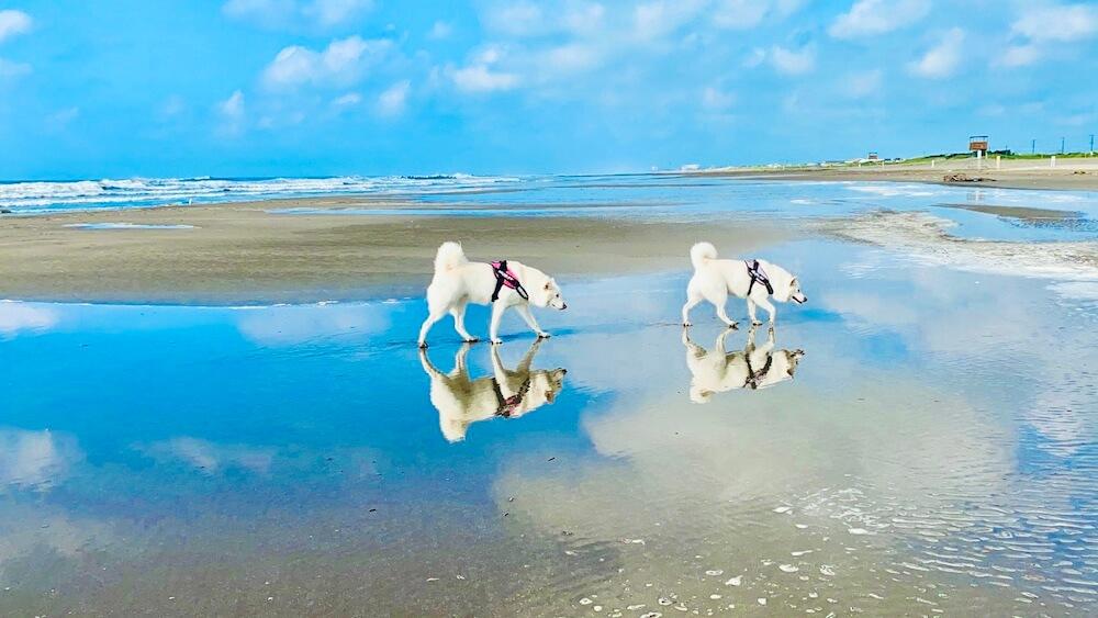 ウユニ塩湖のような絶景を歩く2頭の犬の写真 by 命をつないだワンニャン写真コンテスト「審査員特別賞」受賞作品