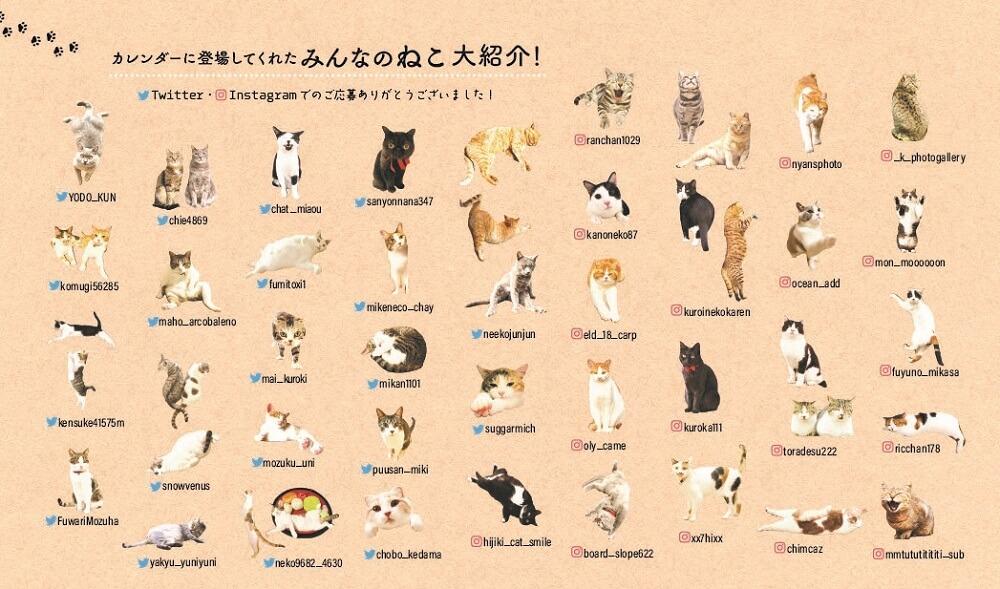 カレンダーに登場する一般公募の猫たち