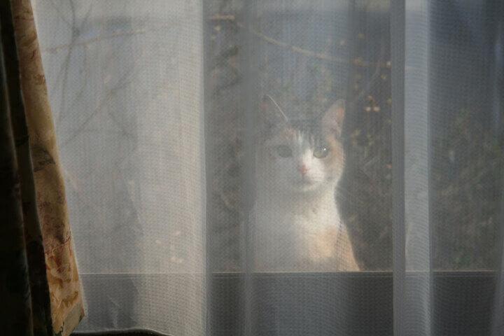 書籍「猫との約束」第17話に登場する猫のねぎ