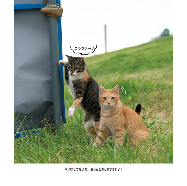 漫画のようなコミカルな猫たち by 写真集『おどるネコうたうネコ』